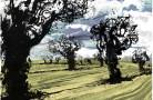 Wild Trees Norfolk